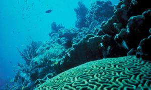 restauración de arrecifes