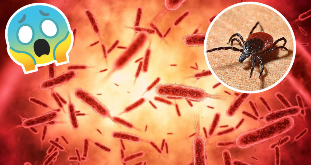 Reaparece mortal bunyavirus en China